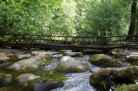 """Dartmoor River Walk, a """"must do"""" activity whilst on a Devon Holiday"""