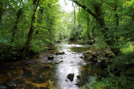 River Bovey close to our Dartmoor Holiday Cottage gives riverside and woodland walks right from the front door