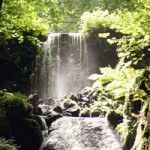 Canonteign falls on Dartmoor close to the holiday home