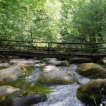 "Dartmoor River Walk, a ""must do"" activity whilst on a Devon Holiday"