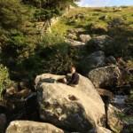 The Tolmen Stone on Dartmoor