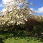 Lustleigh's pub garden close to this dartmoor holiday home