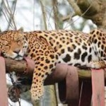 Dartmoor Zoo at Sparkwell is only 31 miles from our Dartmoor Holiday Home