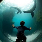 Living Coasts Aquarium in Torquay is only 17 miles from the Dartmoor Holiday Home