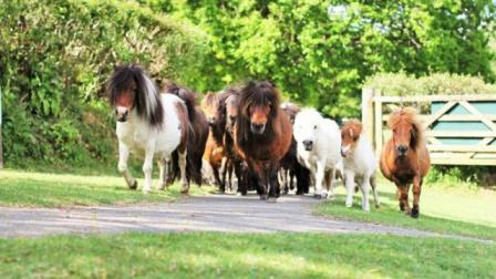 The Miniature Pony Centre is only 7 miles from our holiday rental on Dartmoor