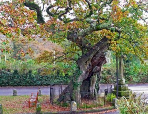 The ancient and venerable oak tree standing in the village green is a great excuse to visit Meavy whilst holidaying at our self catering accomodation on Dartmoor
