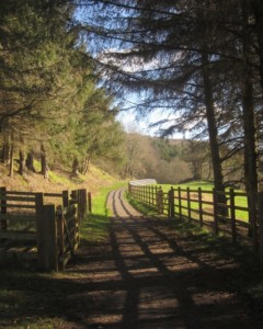 The Wray Valley Trail between Bovey Tracey and Moretonhampstead going through Lustleigh close by Three Pound Cottage the self catering dartmoor holiday rental