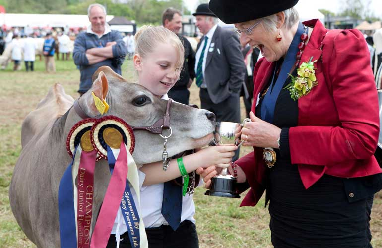 young farmer with prize calf being awarded the trophy